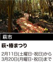 萩市 萩・椿まつり 2月11日(土曜日・祝日)から3月20日(月曜日・祝日)まで