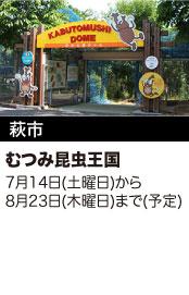 萩市 むつみ昆虫王国 7月14日(土曜日)から8月23日(木曜日)まで(予定)