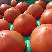 秋穂(あいお)フルーツトマトの写真