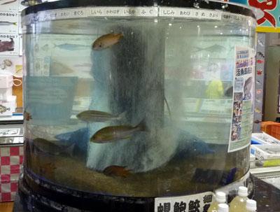 店内にある水槽の写真