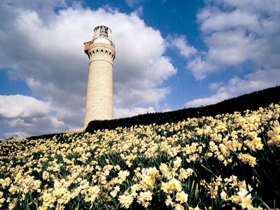 角島灯台とスイセンの写真