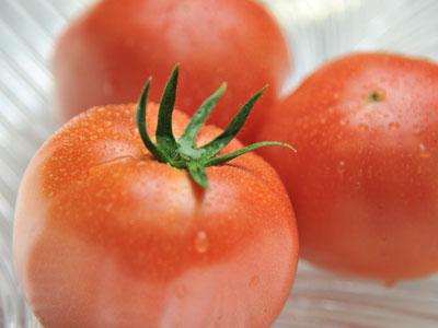 大人気のトマトの写真