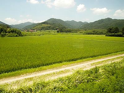ほ場整備された田んぼの写真