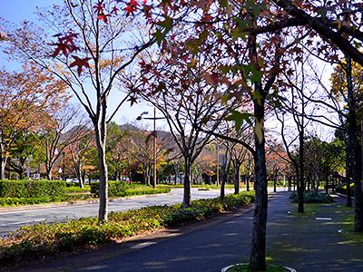 パークロードの紅葉の写真