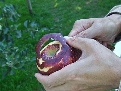 リンゴの皮をむいている様子の写真
