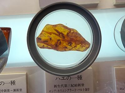 昆虫入りのコハクの写真
