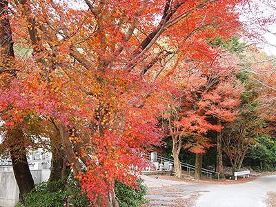 大寧寺の紅葉の写真