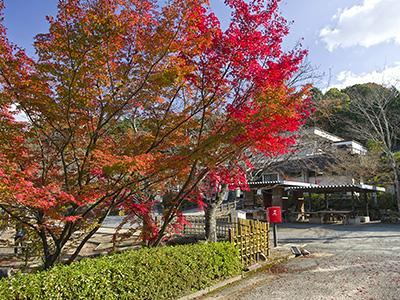 東行庵の紅葉の写真